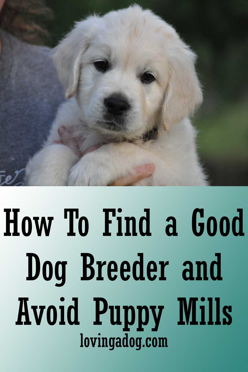 How to Find a Good Dog Breeder and Avoid Puppy Mills