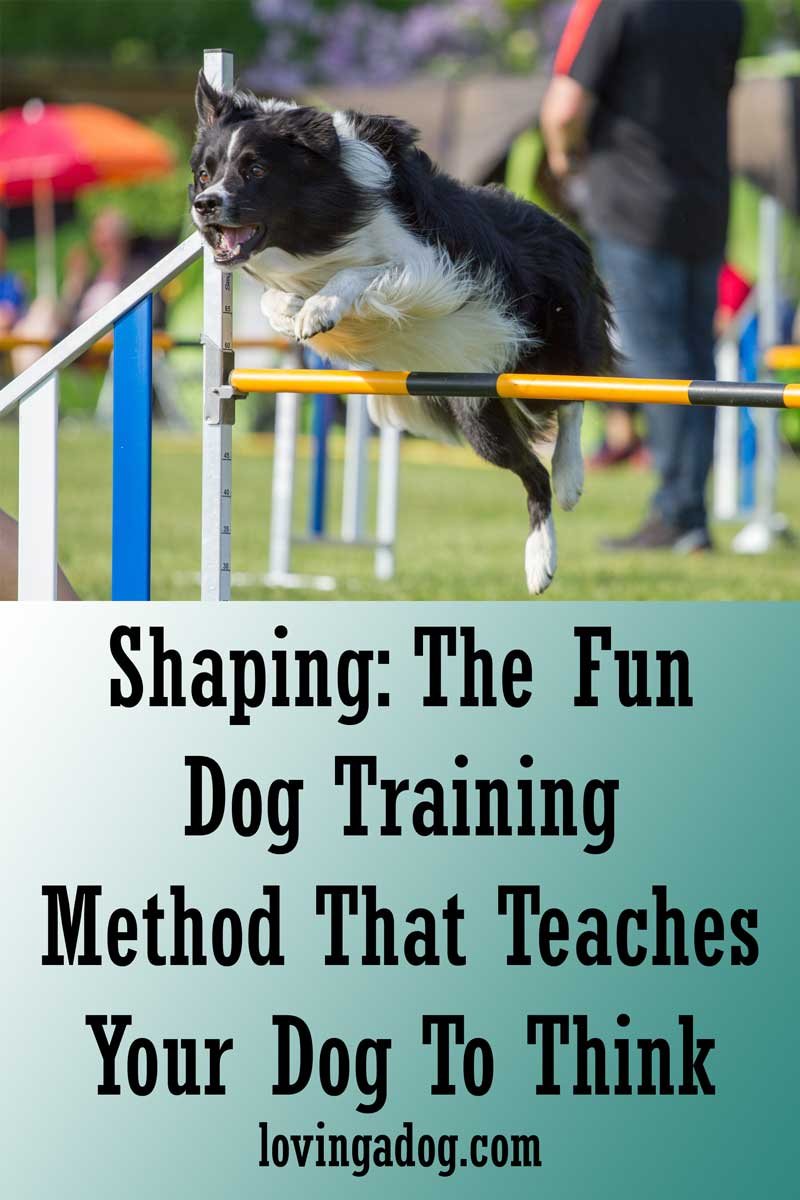 Shaping: The Fun Dog Training Method That Teaches Your Dog To Think