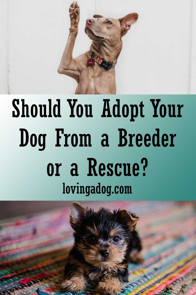 Should You Adopt Your Dog From a Breedeer or a Rescue