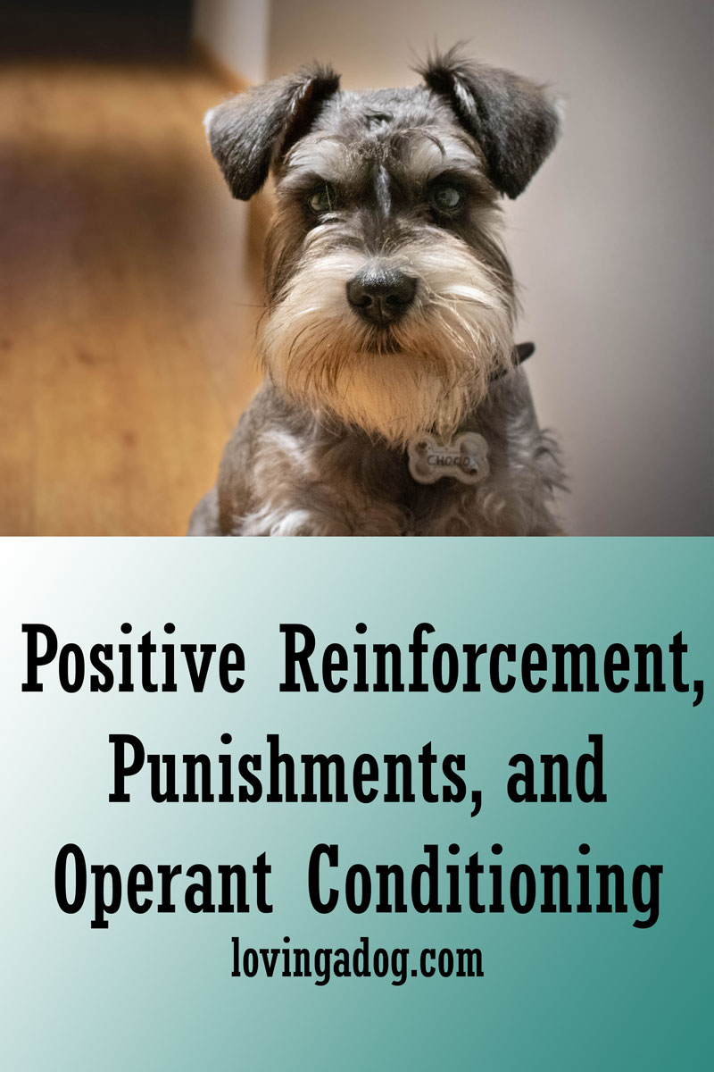 Positive Reinforcement, Punishments, and Operant Conditioning